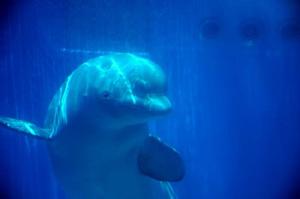 神奈川でイルカ・クジラと過ごす一日!